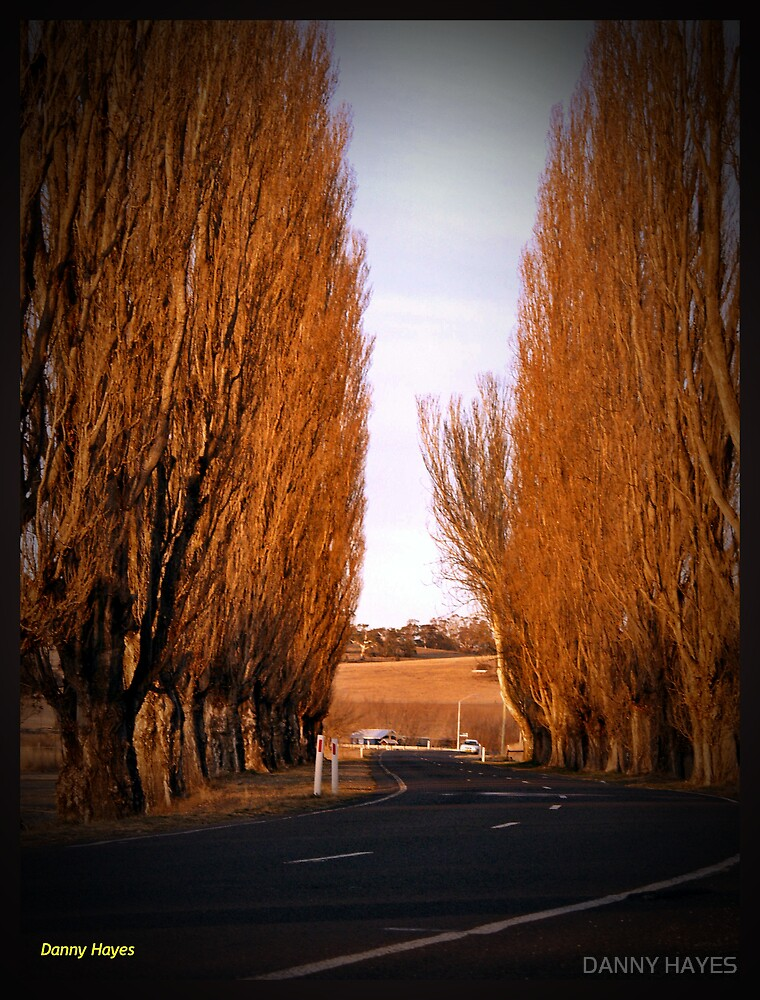 BERRIDALE NSW by DANNY HAYES