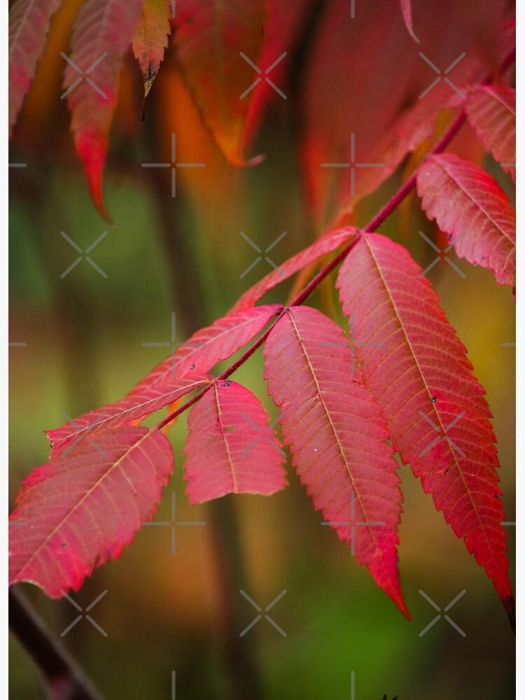 Autumn Sumac by debfaraday