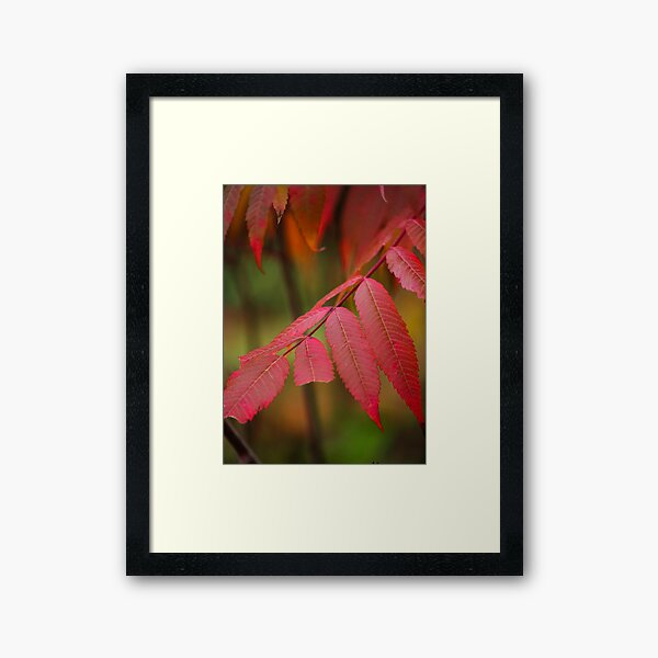 Autumn Sumac Framed Art Print