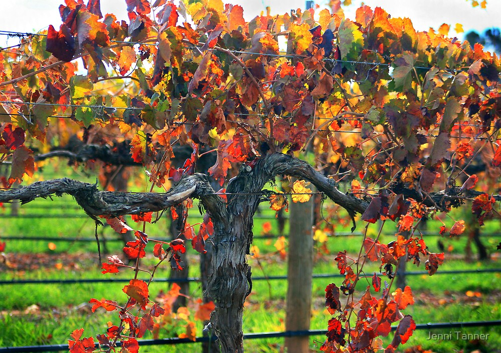 Glorious Vines by Jenni Tanner
