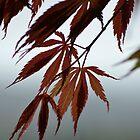 Autumn state by lizdomett