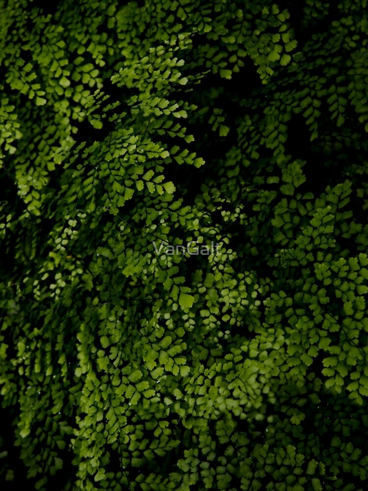 Small leaves.  by VanGalt