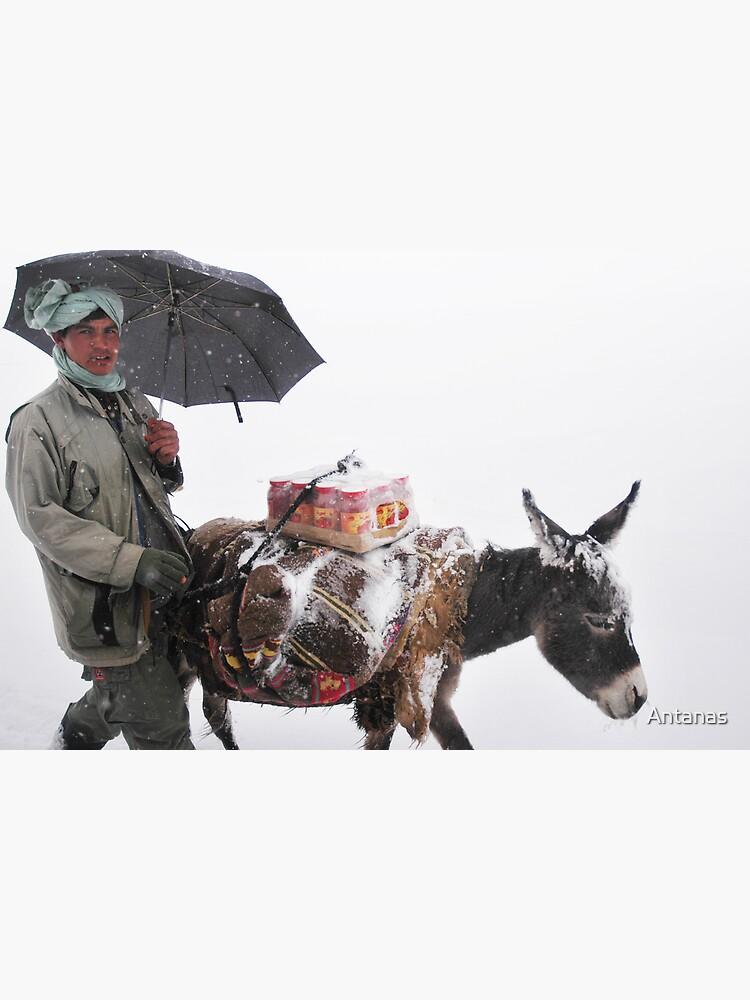 Life (Afghanistan) by Antanas
