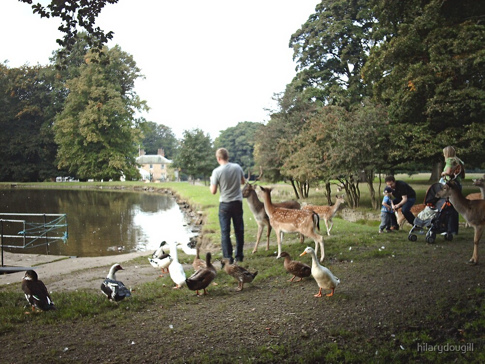 Feeding the deer - candid shot by hilarydougill