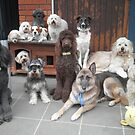 Hold It!   Photo Day at Doggy School. by Michael John