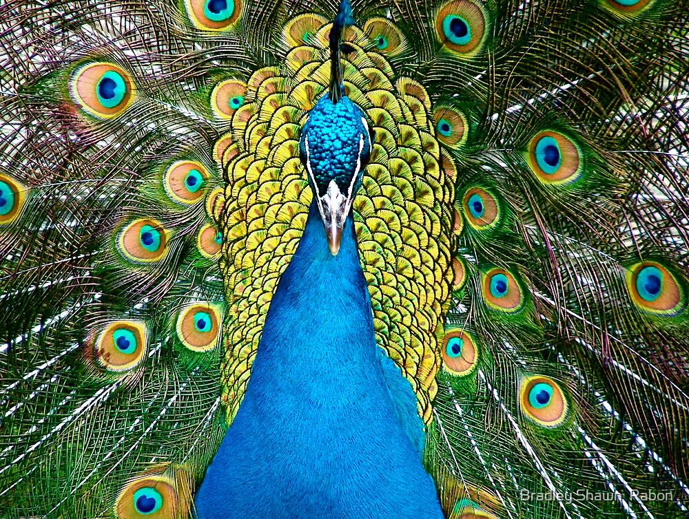 """Proud as a Peacock"" by Bradley Shawn  Rabon"