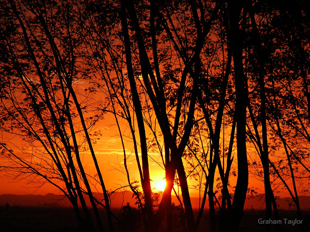 Through the Trees by Graham Taylor