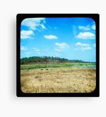 Buffulo Country Canvas Print