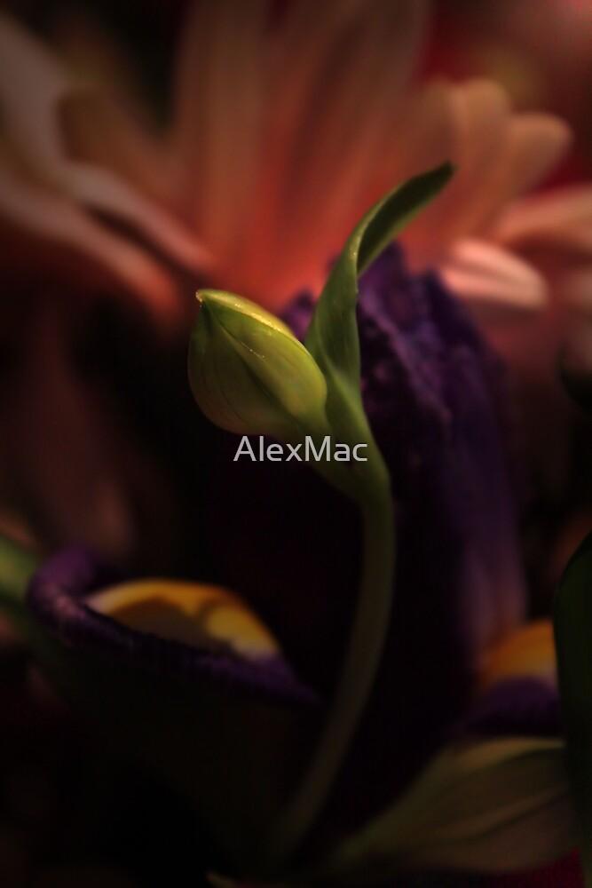 New Life by AlexMac