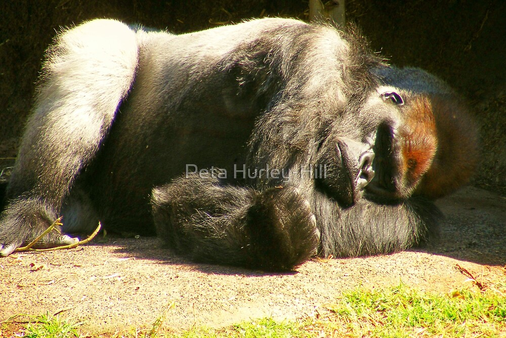 enjoying the sun by Peta Hurley-Hill