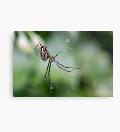 Spiders have jewels on their legs Metal Print