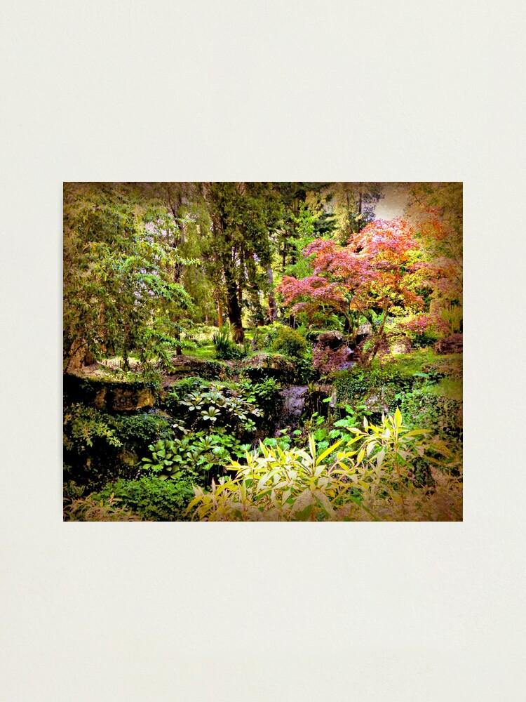 Alternate view of Arboretum Photographic Print