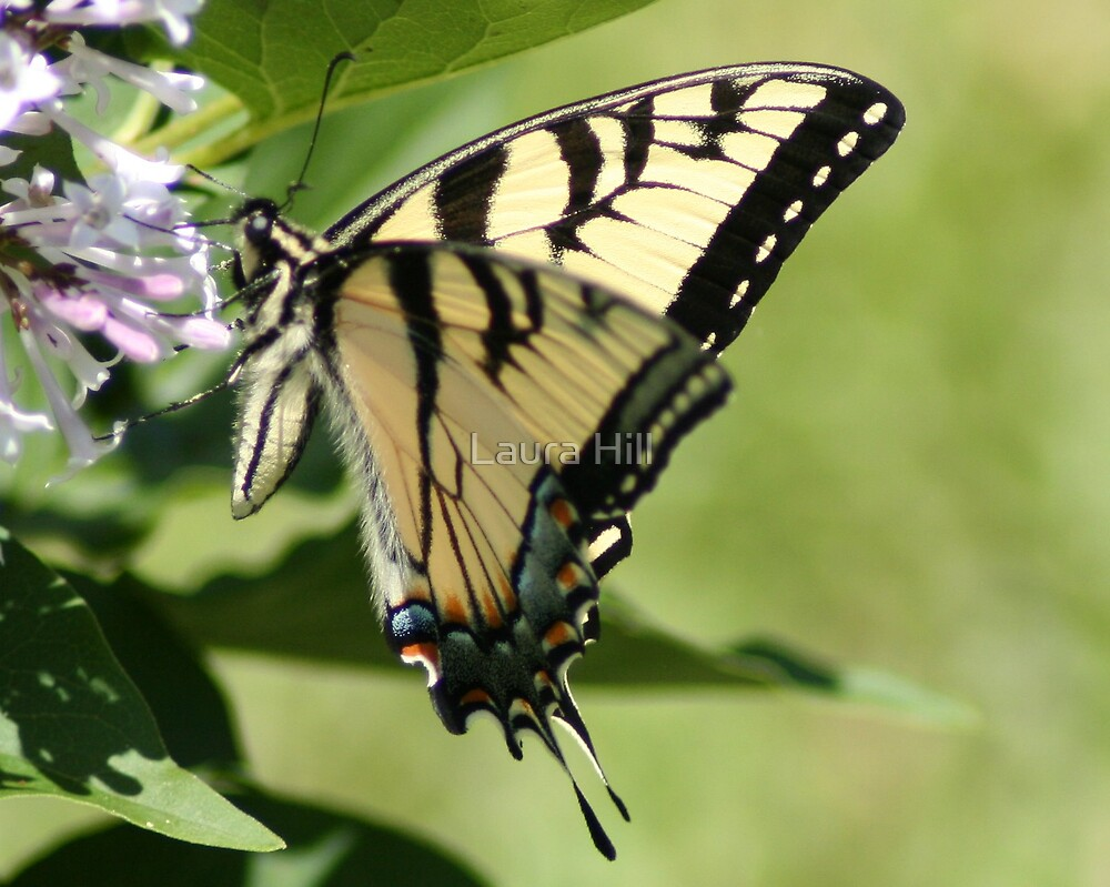 Flutter By by Laura Hill