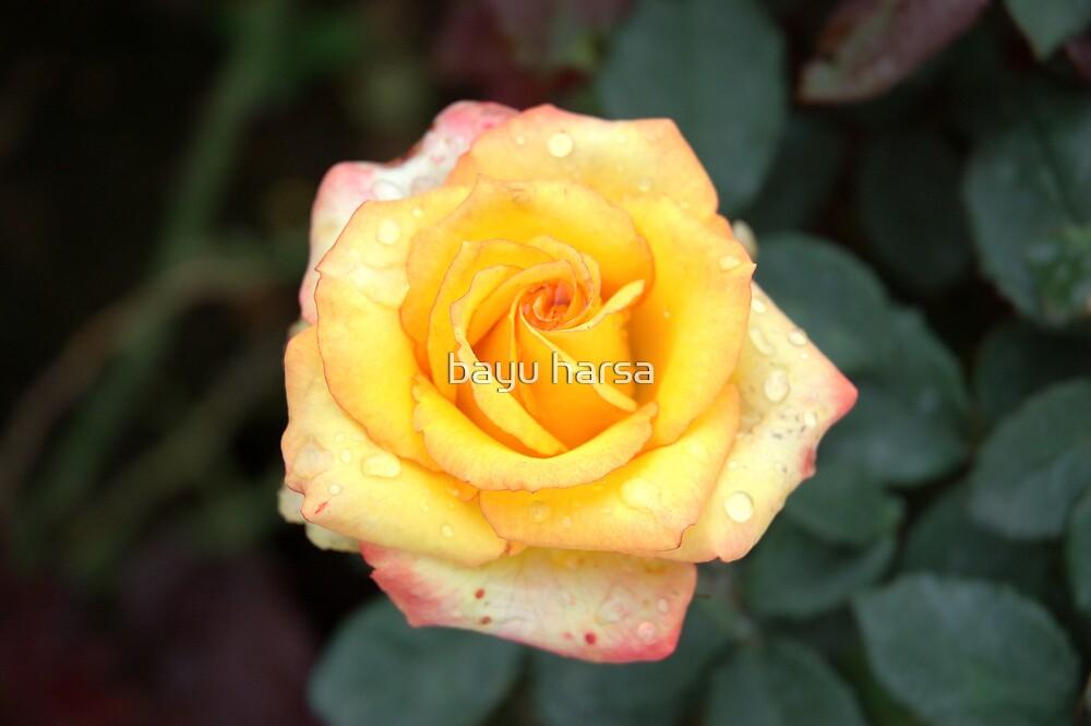 rose by bayu harsa