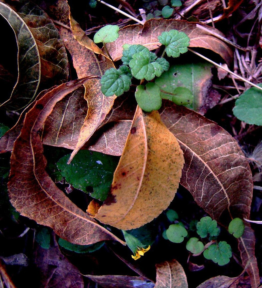 Fall Still Life by Timothy Wilkendorf