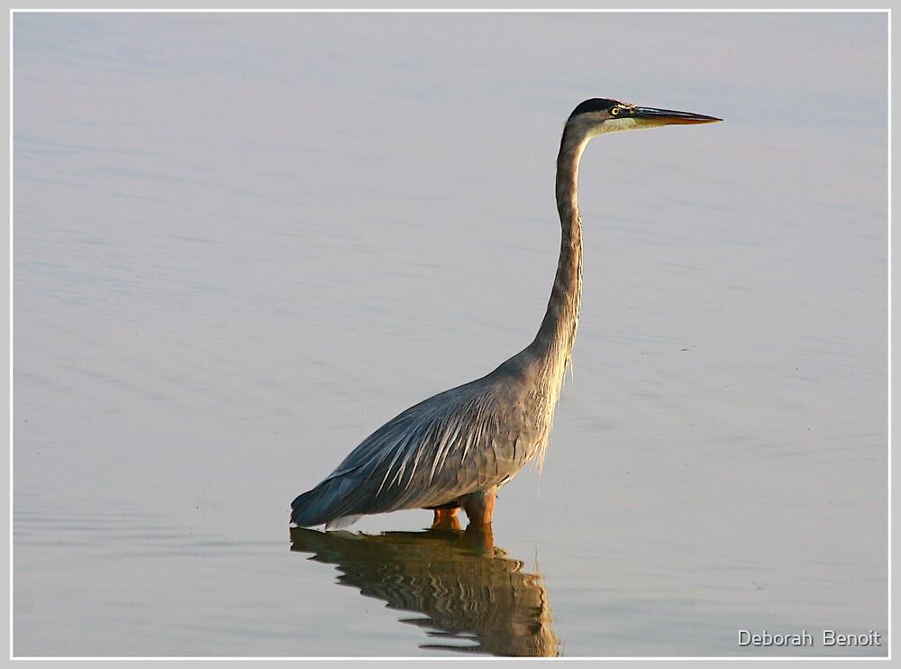 Evening Lake Stroll by Deborah  Benoit