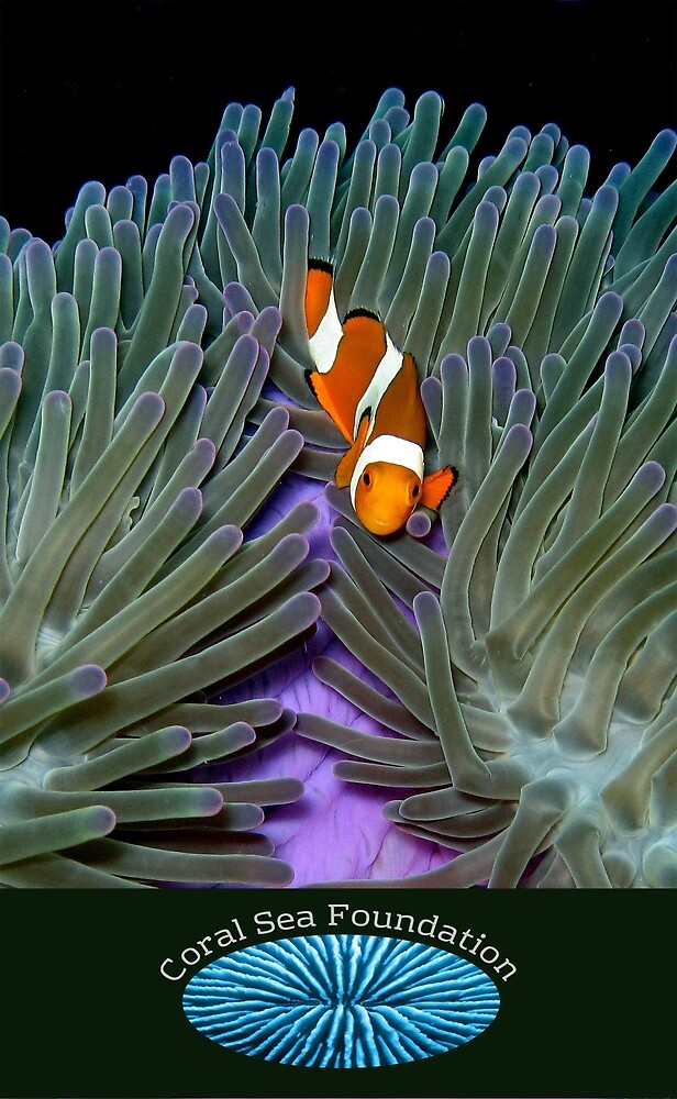 Clownfish at Misool with logo by Reef Ecoimages