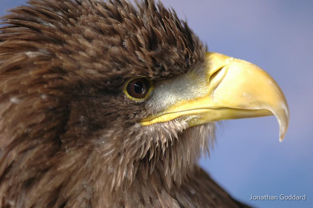 Sea Eagle by Jonathan Goddard