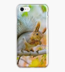 Red euroasian squirrel washes on the maple branch iPhone Case/Skin