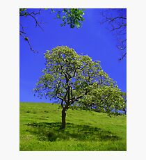 The lonely Tree, Costa Rica Photographic Print