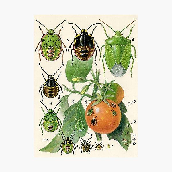 Vegetable Bug Photographic Print