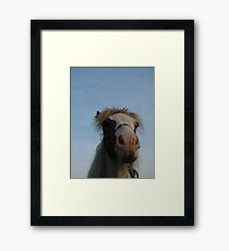 Shetland Pony Framed Print
