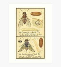 The Queensland Fruit Fly-The Mediterranean Fruit Fly Art Print