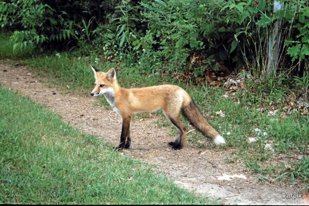 Fox 1 by katpix
