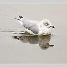Seagull Reflections by Deborah  Benoit