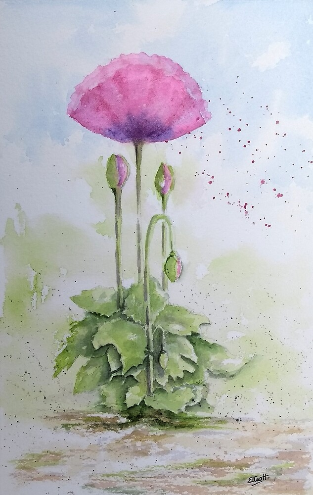 The Poppy Presents by Pat  Elliott