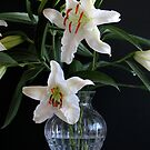 Lilies on Black by Jan  Wall