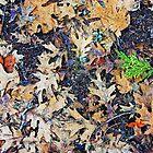 Seasons by Harry Oldmeadow