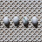 Eggs in a line by Carol Dumousseau