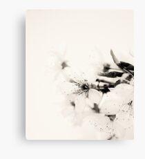 Monochrome Blossoms Close-up Canvas Print