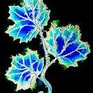 Leaves of Blue by Linda Callaghan