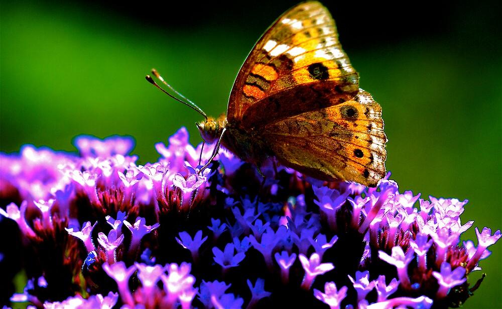 nature  by alfarman