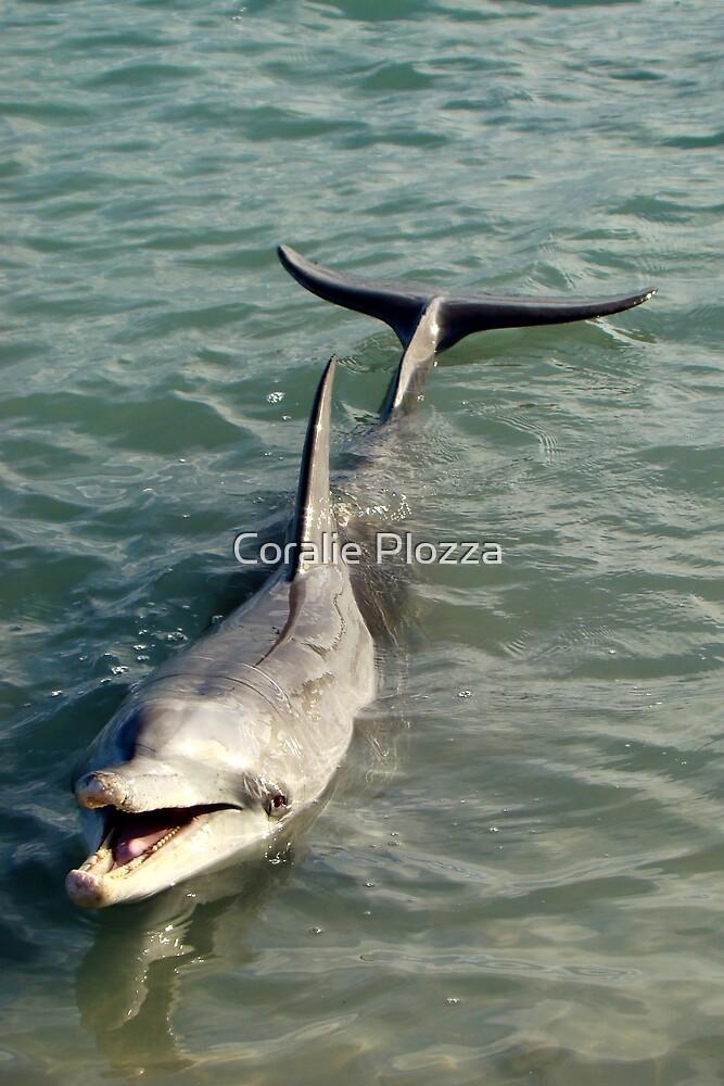 Monkey Mia Dolphin by Coralie Plozza