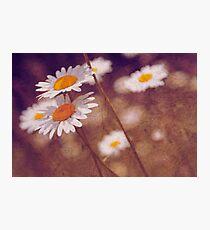 soleils Photographic Print