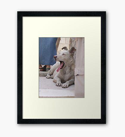 Dogs of Greece Framed Print