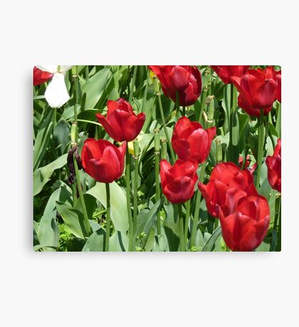 Red Tulips , Throw Pillow , Tote bag, Duvet, prints Canvas Print