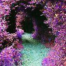 Purple Fantasy Woodland Forest Path by Shelly Still