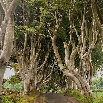 The Dark Hedges by claytonT