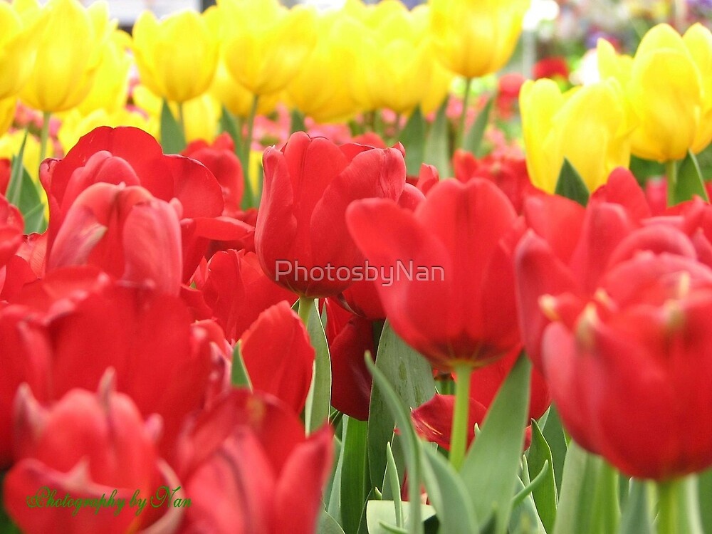 Red and Yellow by PhotosbyNan