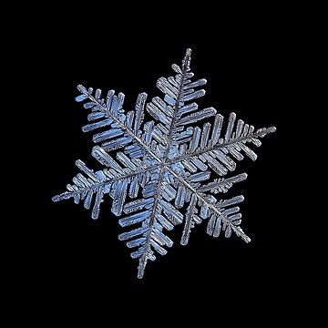 Real snowflake - 2017-02-13 4 Black by chaoticmind75