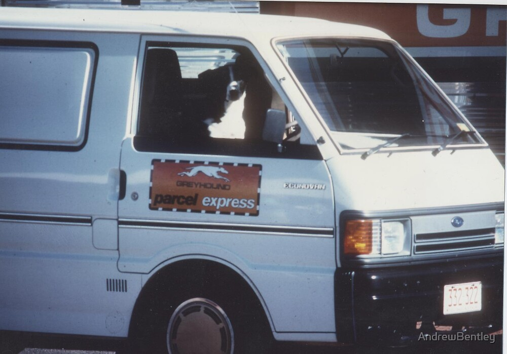 Greyhound delivery dog  Alice Springs 1980 by AndrewBentley