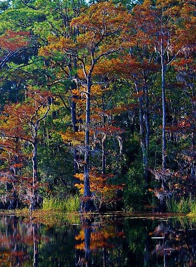 Autumn Trees by Cynthia48