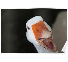 Goose. Poster