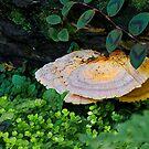 Forest Mushroom by TJ Baccari Photography