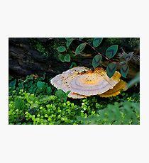 Forest Mushroom Photographic Print