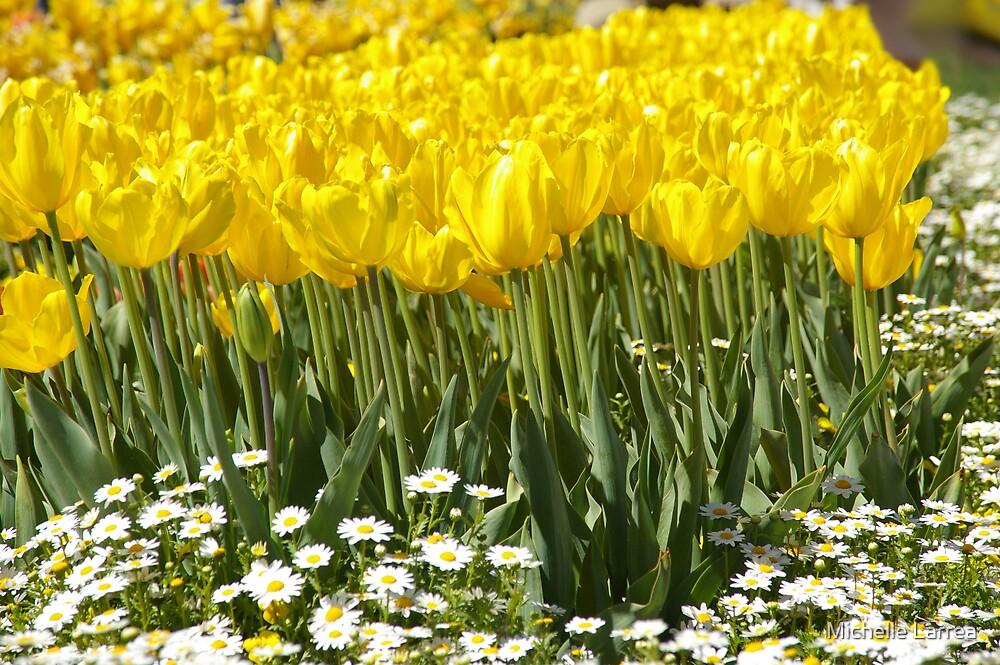 daisy sunshine by Michelle Larrea
